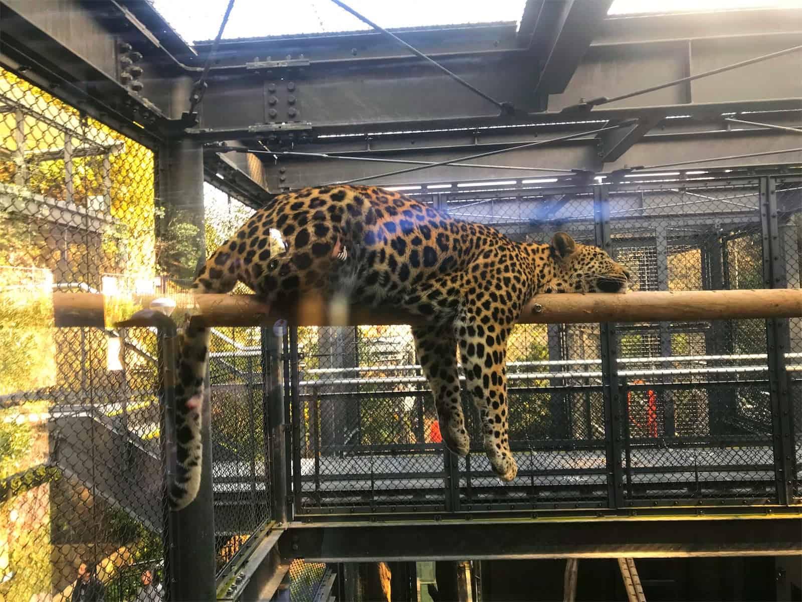 動物園へお出かけしました!